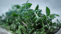 Detail footage of fresh oregano - stock footage