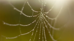 Old vineyard in a foggy day with a wet spider web. - stock footage