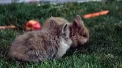 Funny rabits on the grass Stock Footage