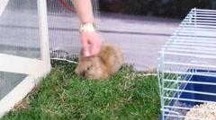 Gentle hand stroking the rabbit Stock Footage