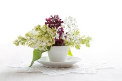 Branch of white and purple blossoming bird cherry (Prunus padus) in a small w Stock Photos