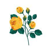 Yellow Rose Hand Drawn Realistic Illustration - stock illustration