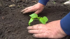 Woman planting vegetables at community garden - stock footage