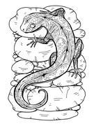 Lizard tropical illustration - stock illustration