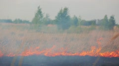 the grass field burns during a forest fire - stock footage