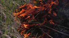closeup of a field of grass burning during a forest fire - stock footage