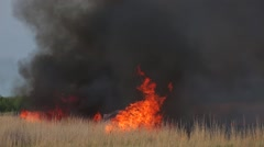 The grass field burns during a forest fire Stock Footage