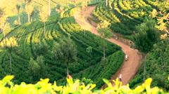 Misty early morning, Tea Estate worker, Central Highlands, Sri Lanka Stock Footage