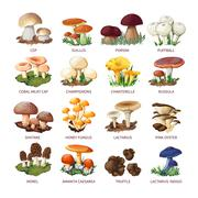 Collection Of Edible Mushrooms And Toadstools Stock Illustration
