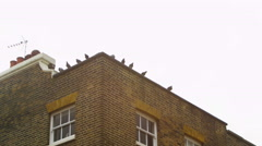4K Pigeons sitting on roof of period building in a suburb of London Stock Footage
