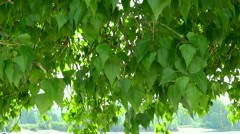Green tree leafs moving in the wind. Stock Footage