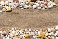 Background: sea star and shells on the sand of the sea - stock photo