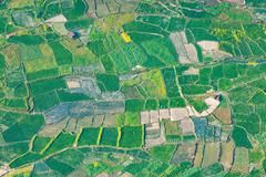 Paddy fields aerial view - stock photo