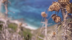 Focusing from dry Wild Thorn to Sea on Petani Beach Kefalonia Greece Stock Footage