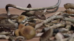 Psychedelic Drugs - Magic Mushrooms Stock Footage