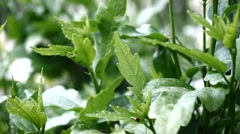 Green salad soft focus - stock footage