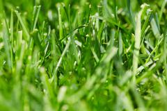 Green grass. - stock photo