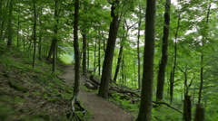 Point of View Moving Through Forest to Mountain Overlook Stock Footage