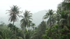 Beautiful wild tropical forest in the pouring rain Stock Footage