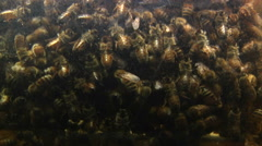 Close Up of Honey Bees In Hive - stock footage