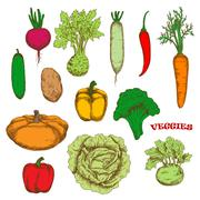 Colorful organically grown fresh vegetables sketch - stock illustration