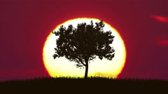 The tree against the background of sunrise. Time lapse - stock footage