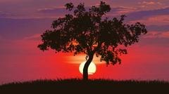 The tree against the background of sunrise. Time lapse Stock Footage
