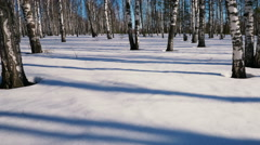Slider shoot of  moving shadows from trunks of trees in winter forest, time laps Stock Footage