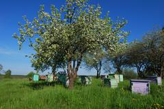 Honey bee hives in spring apple garden Stock Photos