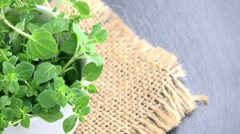 Oregano (not loopable; 4K) - stock footage