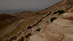 Flock of Sheep in the Mountains of Jordan. Stock Footage