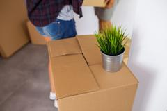 Moving box with a plant on it. Time to unpack. Close up. Stock Photos
