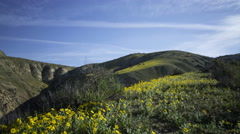 2axis MoCo Time Lapse of Wildflower Super Bloom in Carrizo Plain  Stock Footage
