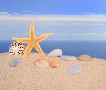 Starfish and seashells on a beach sand - stock photo