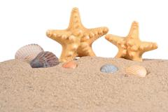 Starfishs and seashells in a beach sand on a white - stock photo