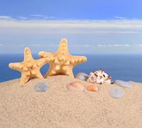 Starfishs and seashells on a beach sand - stock photo
