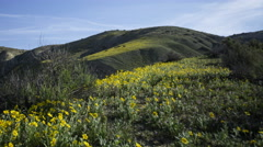 2axis MoCo Time Lapse of Wildflower Super Bloom in Carrizo Plain -Long Shot- Stock Footage