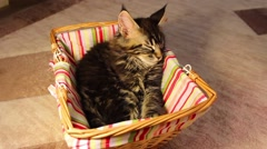 Cat sleeping in a basket Stock Footage