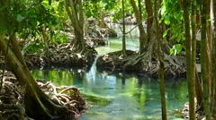 Tha pom mangrove forest and creek in Thailand Stock Footage