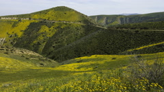 2axis MoCo Time Lapse of Panoramic Wildflower Super Bloom 2016 -Long Shot- Stock Footage