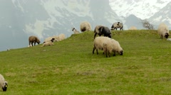 Panorama of the  pastures in the Montenegro, sheep graze Stock Footage