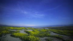 Astro Time Lapse of Milky Way over Wildflower Super Bloom at Moonset  Stock Footage