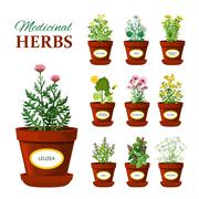 Medical Herbs In Pots With Labels - stock illustration