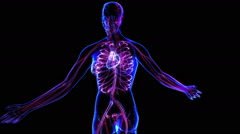 Female Circulatory System - stock footage