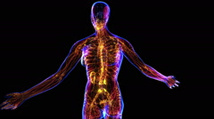 Female Lymphatic System Stock Footage