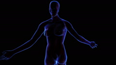 Female Muscular system Stock Footage