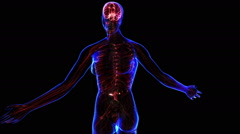 Female Nervous system - stock footage