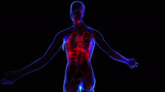 Female Respiratory system Stock Footage