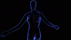 Female Urinary system Stock Footage