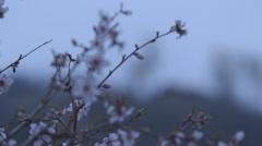 Dillijan village garden Stock Footage